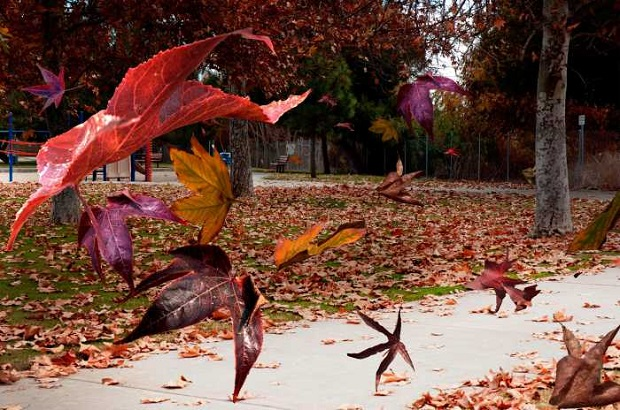 احذروا هواء الخريف!!